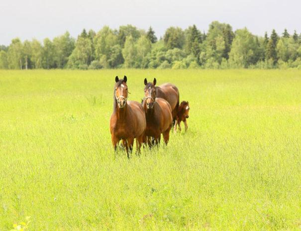 Лошади. Прогулки и катание.